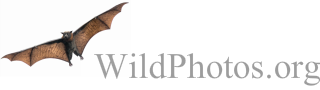 WildPhotos.org